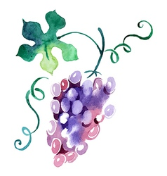 Painted watercolor grape vector