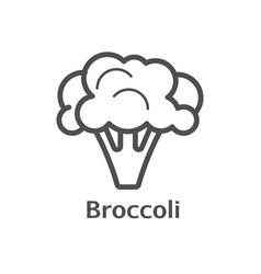 broccoli thin line icon isolated cauliflower vector image