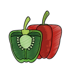 Drawing pepper half nutrition food vector