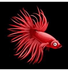 Single red fish rooster closeup cartoon vector