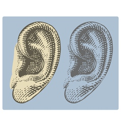 Human ear in engraved style vector image vector image
