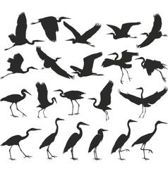 Bird - herons vector image vector image