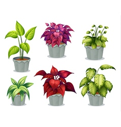 Six non-flowering plants vector image vector image