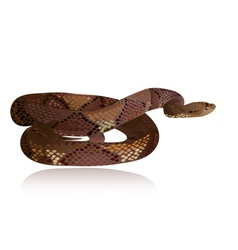 snake3 vector image vector image