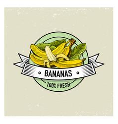bananas vintage hand drawn fresh fruits vector image