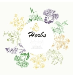 Background with herbs in a circle vector