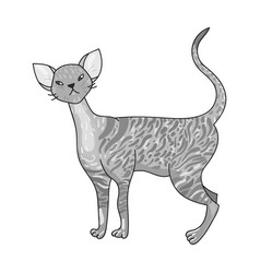 cornish rex icon in monochrome style isolated on vector image vector image
