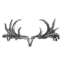 Irish elk skull vintage vector
