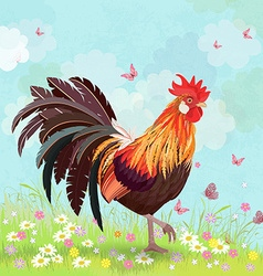 lovely rooster in sunny day vector image vector image