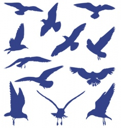 Birds seagulls in blue silhouettes vector
