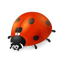 Cute ladybird on white background vector image vector image