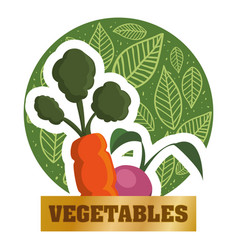vegetables fresh natural food health card vector image