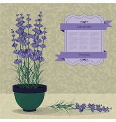 Lavender in a pot on the abstract background vector