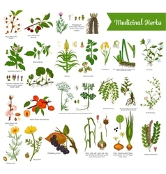 Medical herbs isolated with mortar and pestle vector