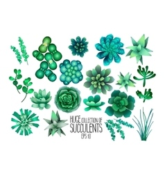 Huge collection of succulents vector