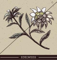 Edelweiss vector