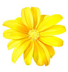 Beautiful yellow flower vector
