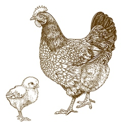 Engraving chicken and chick vector