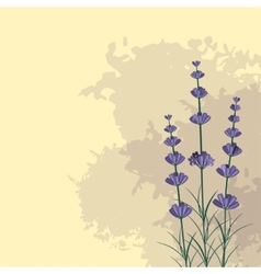 Lavender sprigs on the ink spots background vector