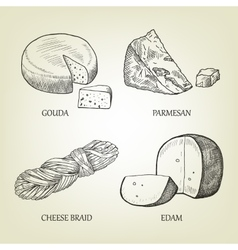 Sketch of different kinds of realistic cheese vector image