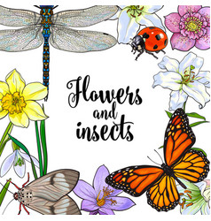square frame of insects and flowers with place for vector image vector image