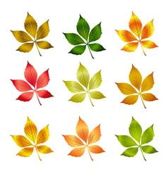 autumn leafs autumn vector image