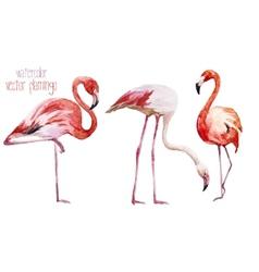 Flamingo set vector