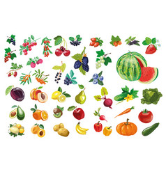Berries fruits and vegetables large collection vector