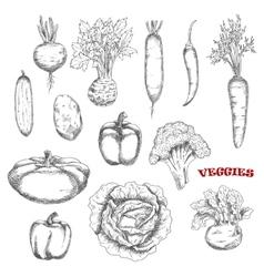 Healthful farm vegetables sketch icons vector image vector image