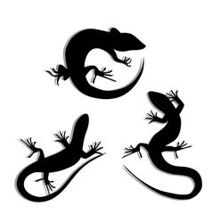 Set of Beautiful monochrome lizard lizard vector image vector image