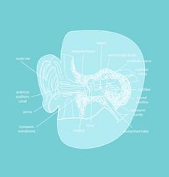 Cartoon silhouette human ear anatomy in a cut vector