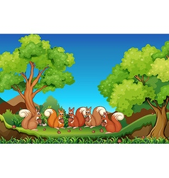 Five squirrels eating walnuts in park vector image