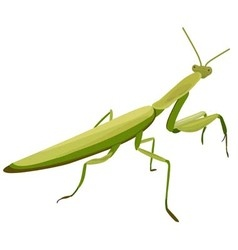 Mantis on a white background vector