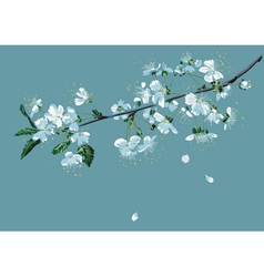 Branch of blossom cherry vector