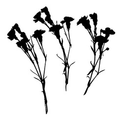 Carnation silhouettes vector