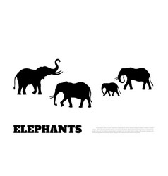 black silhouette of elephants on white background vector image vector image