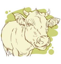 Hand drawing of a happy cow vector