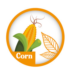 Corn vegetable fresh healthy label vector