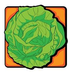 cabbage clip art vector image