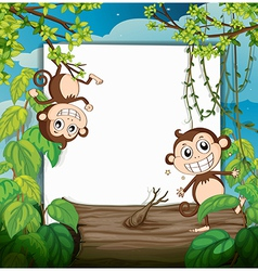 Monkeys and white board vector image