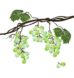 Stylized polygonal branch of green grapes vector image vector image