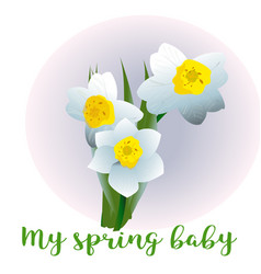Spring flower narcissus for newborn vector