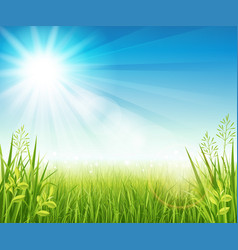summer lawn with grass vector image vector image