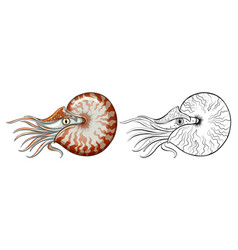 Animal outline for nautilus shell vector