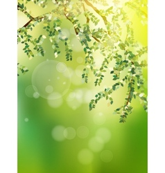 Summer branch with fresh green leaves eps 10 vector