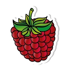 Blackberry fresh fuit healthy isolated icon vector