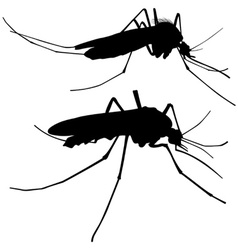 Mosquito silhouettes vector