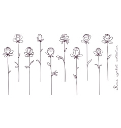 Roses collection of isolated rose flower sketch vector