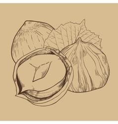 Hazelnut isolated on vintage background vector