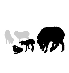 Sheep and lamb composition vector